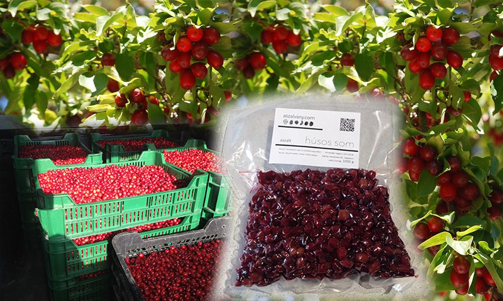 fanyar cseresznye zsírvesztés)